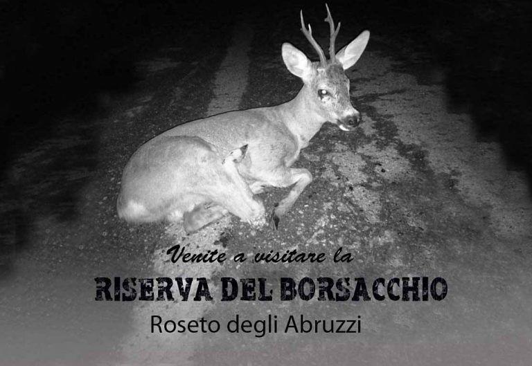 Roseto, 'strage' di animali nella Riserva del Borsacchio: l'appello FOTO SHOCK
