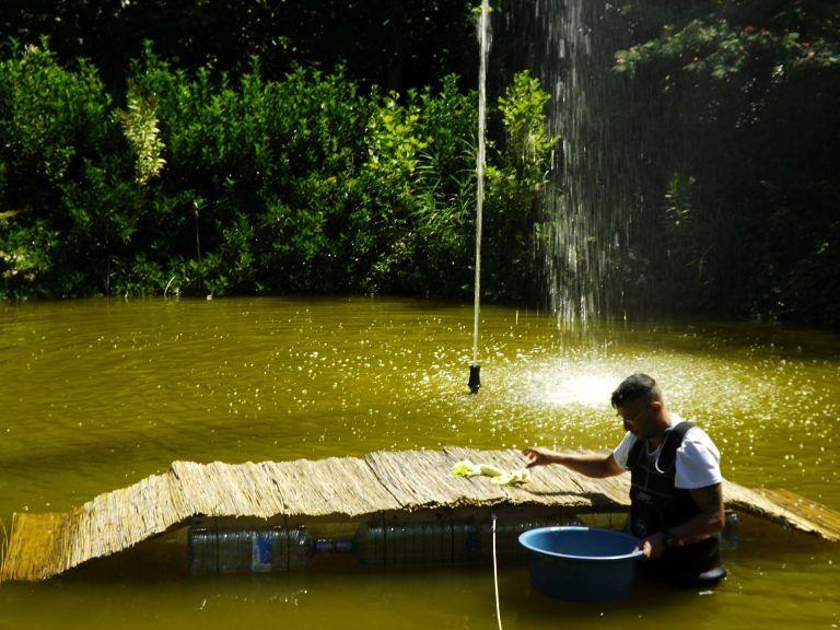 Montesilvano, Parco della Libertà: lavori in corso per il salvataggio delle tartarughe