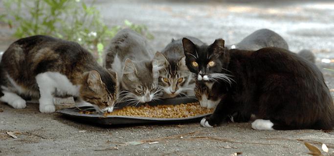 Chieti, ordinanza per lo sgombero della colonia di gatti all'interno di un appartamento cittadino