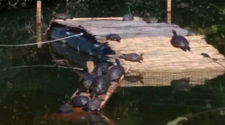 Montesilvano, gettano 2 tartarughe nel Dog Village: sbranate dai cani