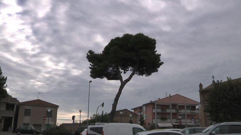 Cologna Spiaggia, albero inclinato verso la chiesa. Presentato l'esposto per abbatterlo