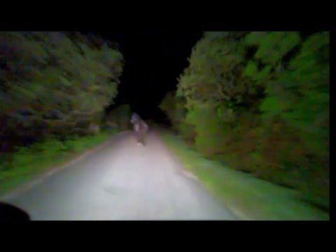 Borgo Santa Maria: impatto nella notte tra furgone e cavallo