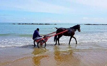 Francavilla, un cavallo a spasso sulla riva del mare