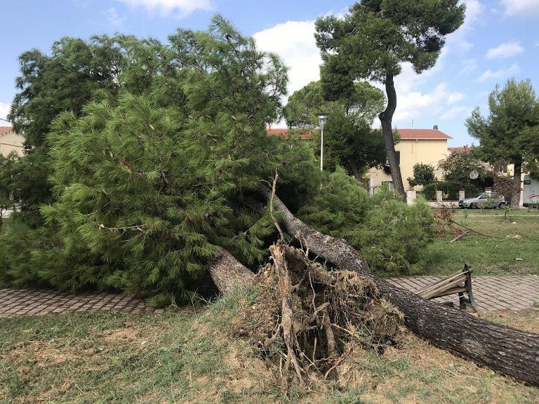Pescara, alberi: chiesto un tavolo per la sicurezza