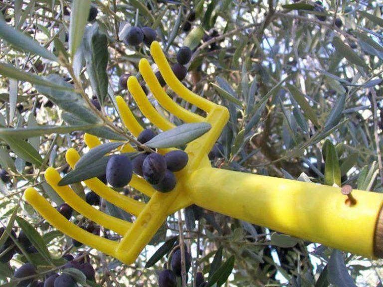 Dalla Puglia all'Abruzzo per raccogliere olive: migranti pagati 3 euro l'ora