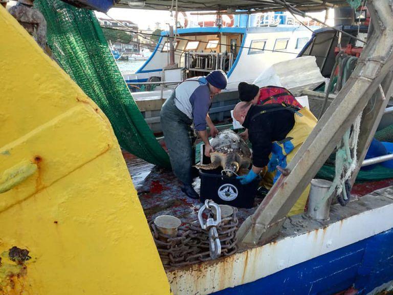Pescara, nelle reti accidentalmente: tartaruga salvata dai fratelli pescatori