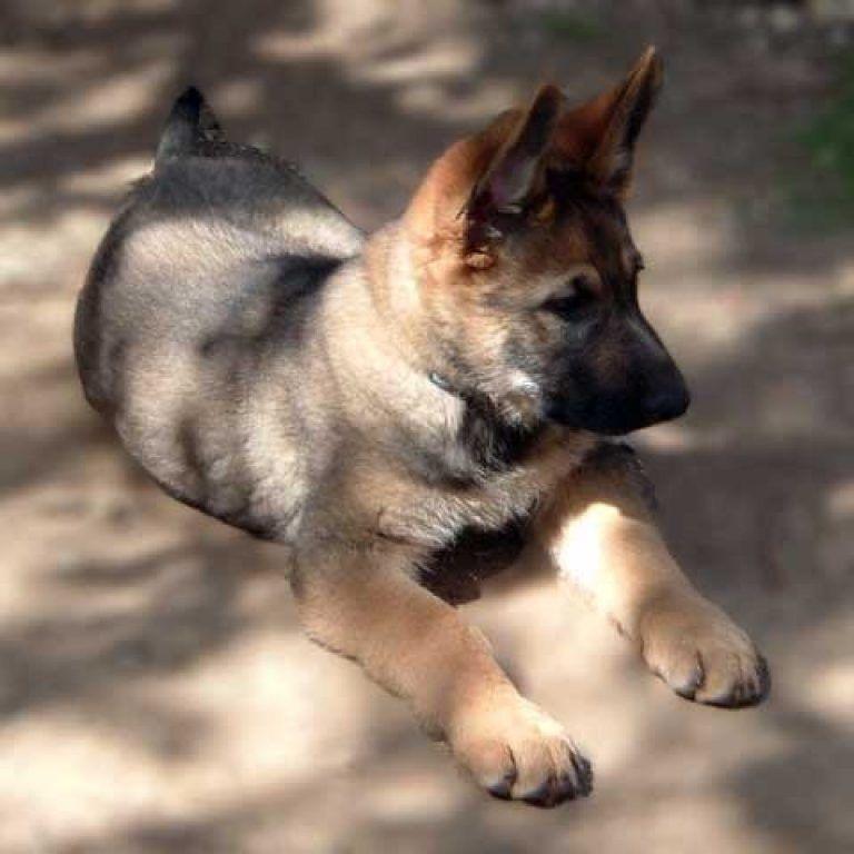 La nuova frontiera: 20.000 cuccioli comprati a rate per Natale