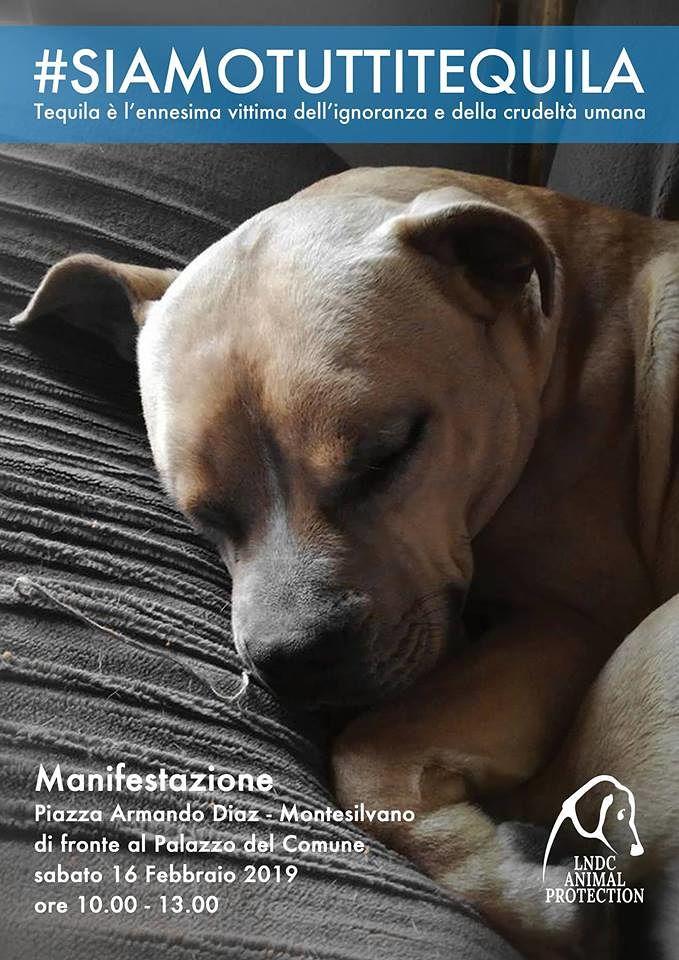 Montesilvano, #siamotuttitequila: manifestazione davanti al Comune per il pitbull ucciso