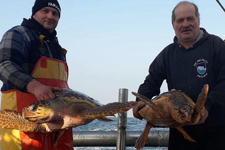 Pescara, 3 tartarughe marine recuperate in un giorno FOTO
