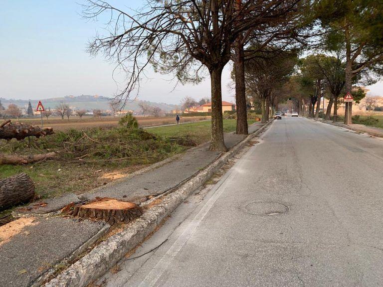 Sant'Egidio, marciapiedi e strade sconnesse dalle radici: al via il maxi-intervento di sistemazione FOTO