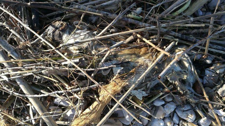 Giulianova, carcassa di cane e rifiuti alla Foce del Salinello FOTO
