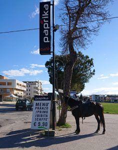 PAPRIKA CAFE' Via Salino Tortoreto LA TUA COMODA PAUSA PRANZO Menù Fisso € 5,90
