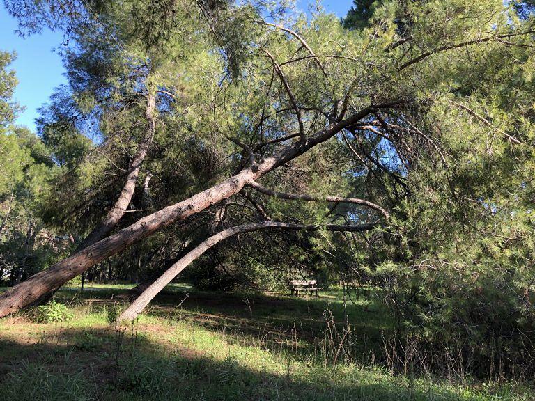 Pescara, la riserva dannunziana riapre a marzo: tolte 170 piante