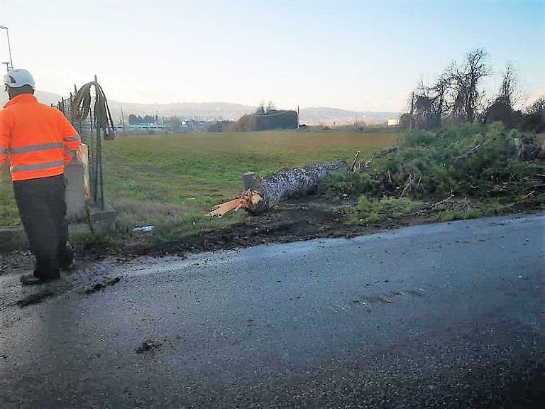 Riprende il taglio degli alberi sulla 259: ruspe all'opera nel territorio di Colonnella