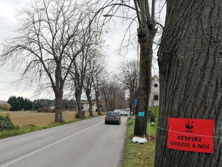 Martinsicuro, taglio delle alberature stradali sulla 259: esposto in Procura del WWF