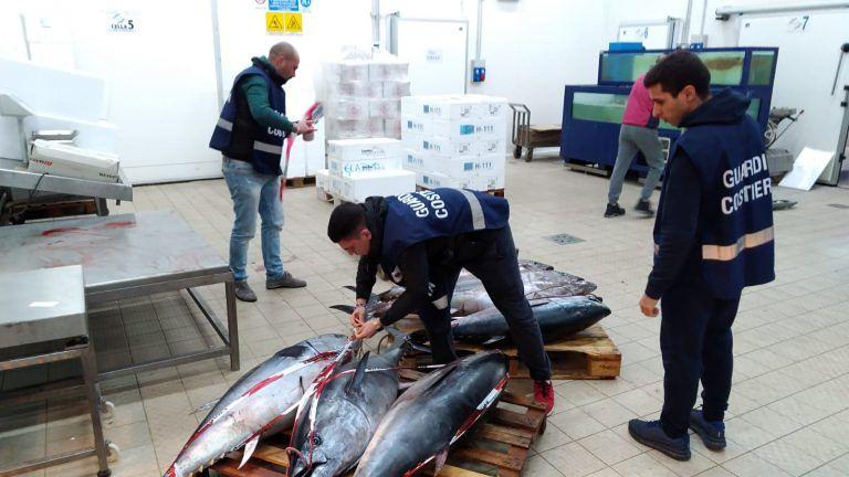 Pescara, 12 tonni rossi nel furgone ma niente documenti: ditta multata di 8mila euro