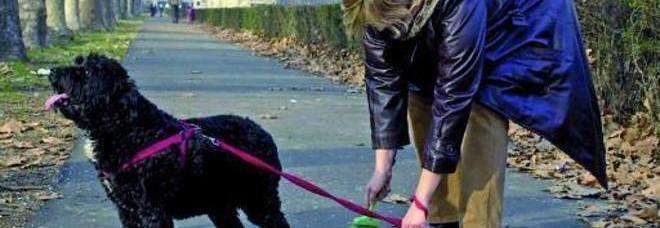 Pescara, volantini e più controlli per chi non pulisce le deiezioni canine