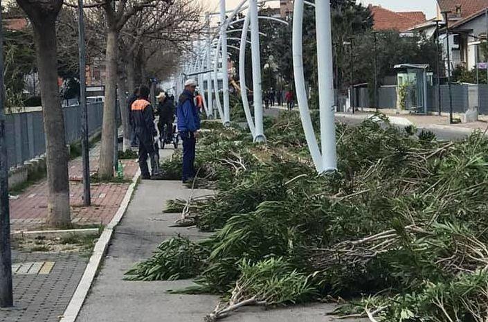 """Strada Parco Pescara-Montesilvano: """"Massacrati centinaia di oleandri"""" FOTO"""