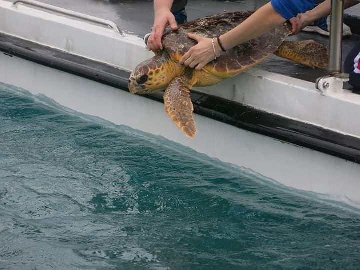 Pescara, 25 aprile di Liberazione anche per 4 tartarughe marine