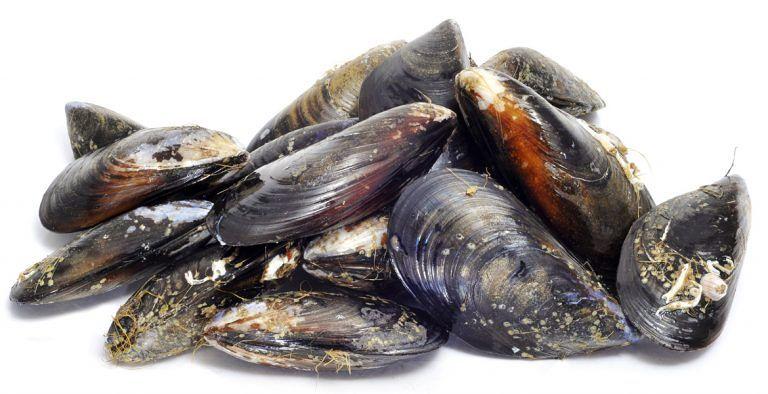 Presunta moria di cozze sulla costa teatina: evitare inutili allarmismi