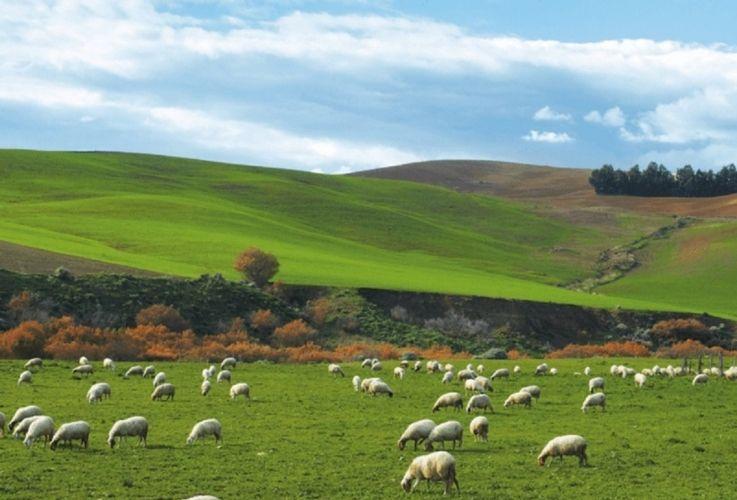 """Valle Castellana, l'assessore Caterini alla Regione: """"Tutelate gli allevatori locali"""""""