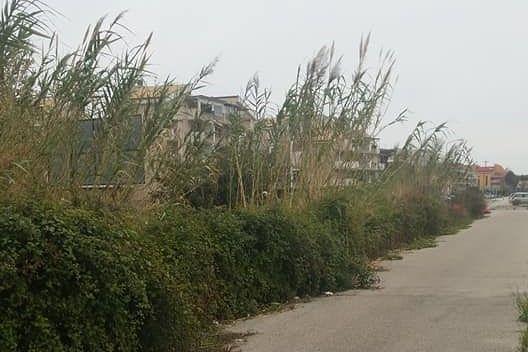 Tortoreto, decoro urbano: ecco l'ordinanza per la pulizia di terreni incolti e aree private