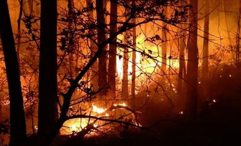 Bosco in fiamme a causa di una grigliata: maxi-multa da 13 milioni di euro
