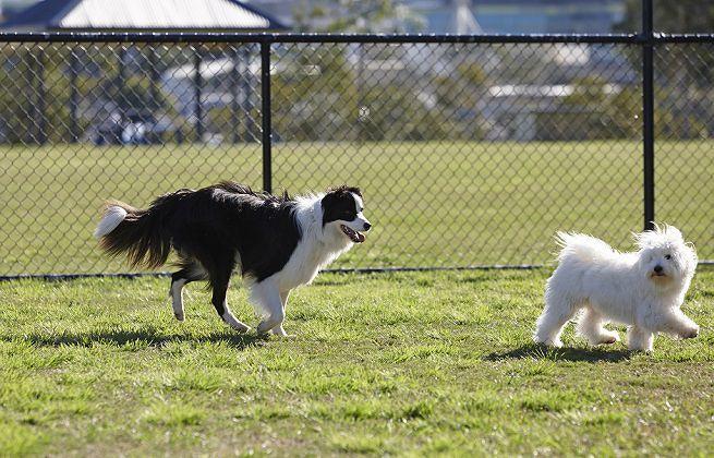 Manoppello, allo Scalo il primo parco per cani
