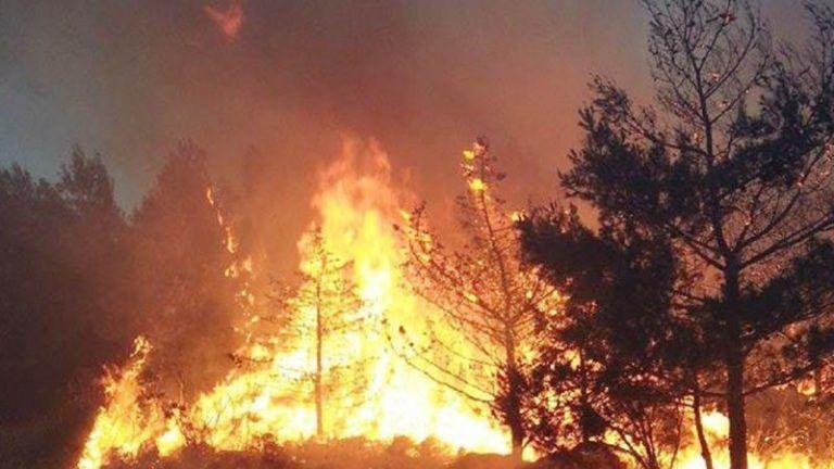 Incendi boschivi in Abruzzo: la Regione stanzia 739mila euro