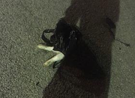 Teramo, gatto morto chiuso in una busta  FOTO