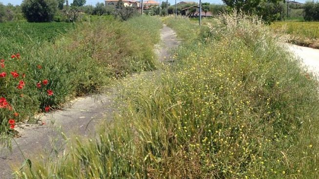 Alba Adriatica, pista ciclabile sul Vibrata: ecco come stanno le cose