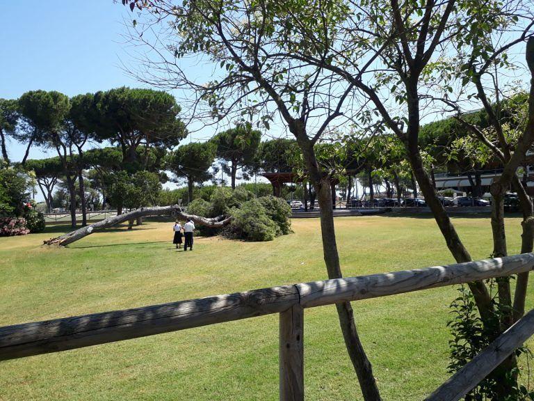 Pineto, pino si sradica al Parco della Pace FOTO
