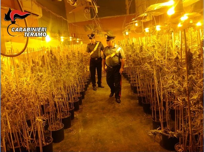 Civitella del Tronto, maxi-coltivazione di marjuana scoperta nel capannone: blitz dei carabinieri a Villa Chierico FOTO