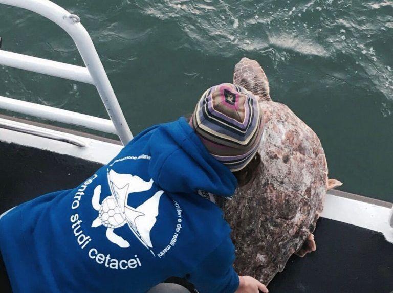 Roseto, tutto pronto per il rilascio della tartaruga Xena
