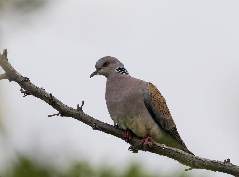 Calendario venatorio, Stazione Ornitologica: è in contrasto con i principi comunitari