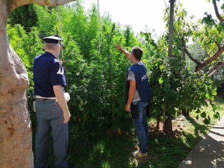 Coltivazione di marjuana a Notaresco e Mosciano: arrestate mamma, figlie e nipote FOTO