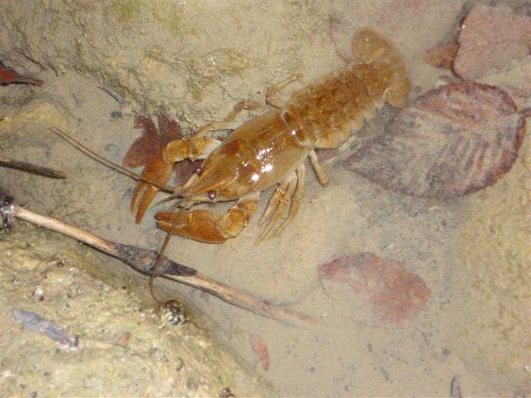 Rocca Santa Maria, sorpreso a pescare gamberi di fiume: scatta la denuncia