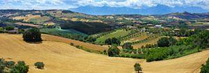 LA NUOVA CHITARRA Pastificio Artigianale Dal 1984 oggi come ieri produzioni esclusive fatte a mano! Giulianova (TE)