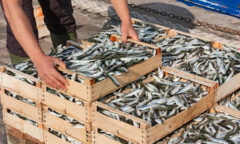 Abruzzo, fondi per il consumo di prodotti ittici nelle scuole