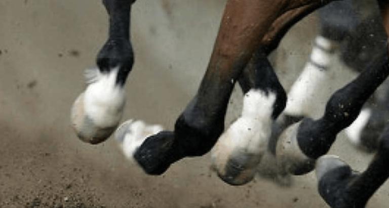 Cavallo dopato per una corsa: allenatore abruzzese denunciato