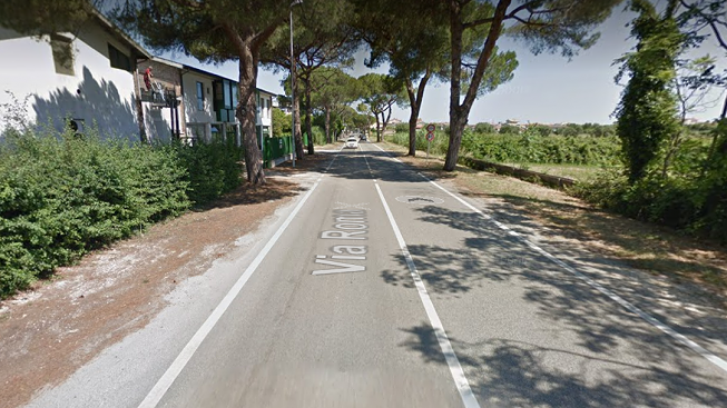 Martinsicuro, taglio pini in via Roma. Vagnoni: ecco come stanno le cose