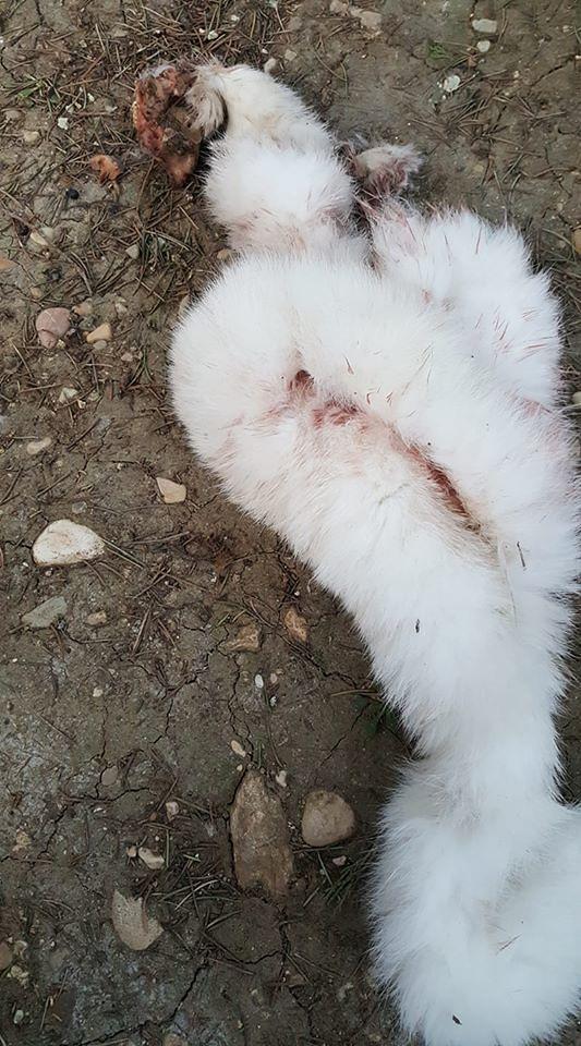 Giulianova, gatto scuoiato e gettato nella colonia felina del cimitero