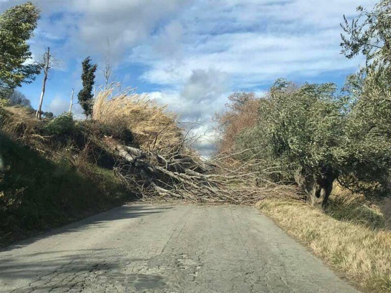 Castellalto, il vento abbatte un albero che ostruisce la strada