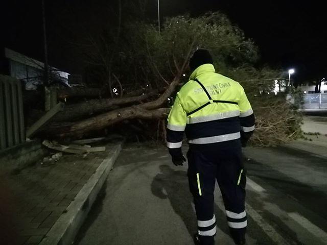 Silvi, pino cade lungo la statale 16: tragedia sfiorata FOTO