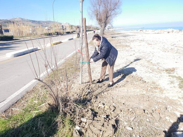 Roseto, 20 nuovi alberi sul Lungomare Trieste grazie ad una donazione
