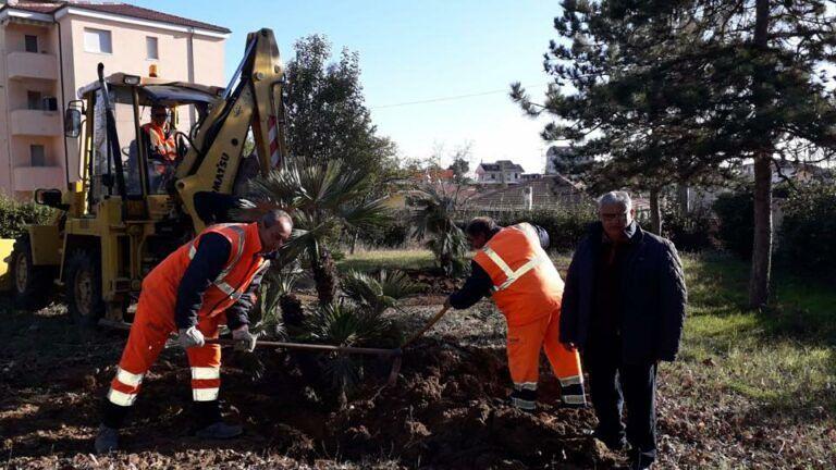 Mosciano, lavori via Passamonti: alberi rimossi piantumati in parchi e aree verdi FOTO