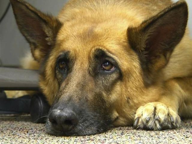 Fossacesia, approvato nuovo regolamento per l'adozione di cani vaganti e catturati sul territorio comunale