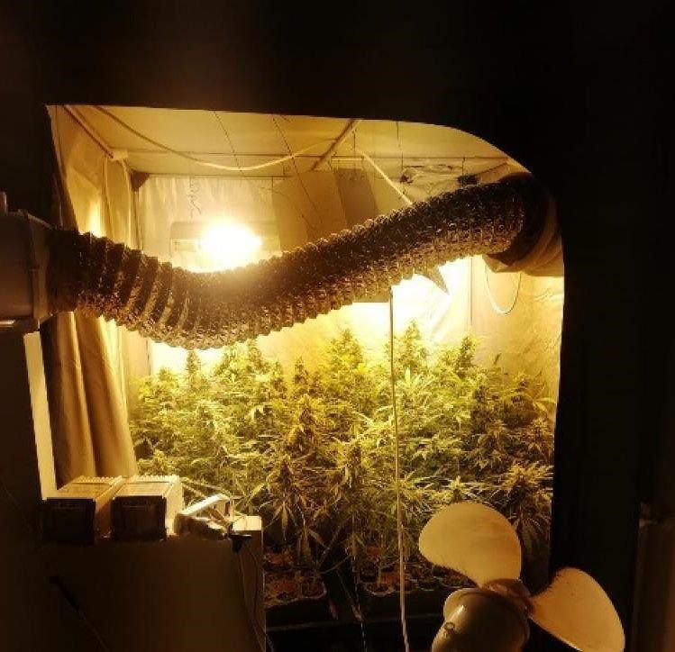 Morro d'Oro, nella villetta aveva allestito una serra per coltivare marijuana FOTO