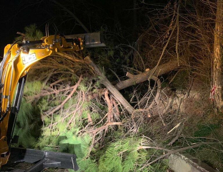 Tortoreto, albero abbattuto dal vento sulla provinciale di Terrabianca