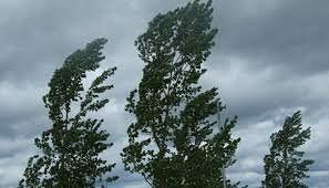Maltempo e vento forte tra danni e raccomandazioni